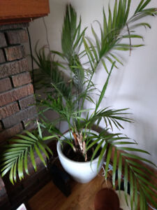 Large house plants for sale
