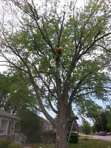 Lumbersmith Tree Removal Services Inc Kitchener / Waterloo Kitchener Area image 3