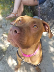 Ari is available for adoption