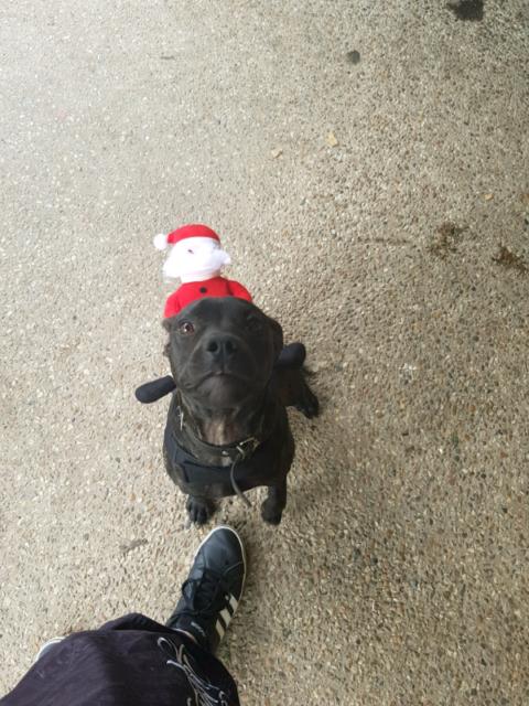 Free to good home | Dogs & Puppies | Gumtree Australia Logan Area
