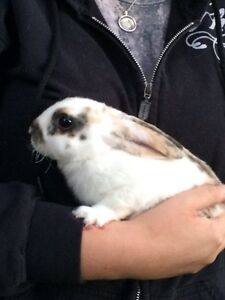 2.5 month old baby bunnies FREE to loving home