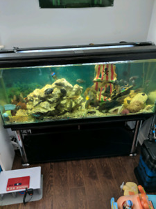 Large Favorite Tank Set ups, now selling.