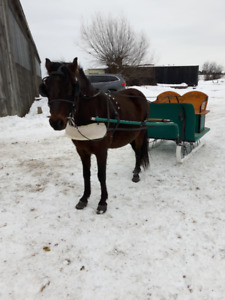 Hand-crafted Pony Sleigh