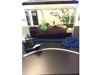 Fish tank starter kit with fish