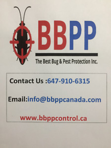 Pest Control Services in Brampton & Mississauga at Lowest Price