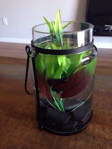 BETTA FISH WITH EVERYTHING YOU NEED