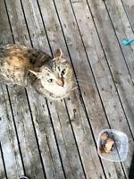 Found Cat!