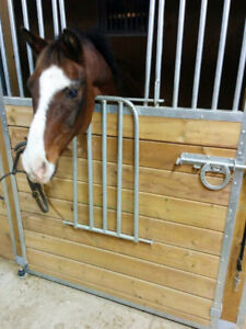 18 yr old, 13.1 hh Gelding for Sale or Lease