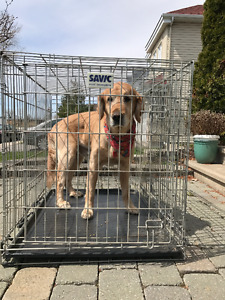 Big Large Dog Chien Cage Woof!