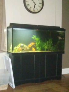 55 gallon tank with everything