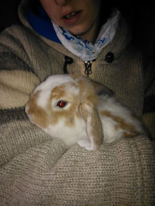 two female rabbits need new home free!