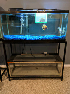 2 30 gal aquarium on double stand.