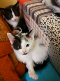 Amazing 3 kittens looking for a forever home