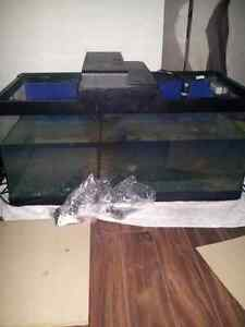 40 gallon tank with 2 fish
