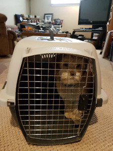 LIKE NEW Small Dog Kennel
