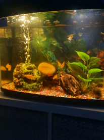 Interpet 64L fishpod Aquarium with filter and heater. Delivery offered