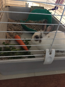 Cute bunny including cage, water bottle and food box