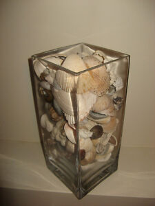 STUNNING Large SHELL COLLECTION in Heavy Glass Vase