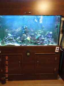 190 gal saltwater tank with lots of corals and fish. Kitchener / Waterloo Kitchener Area image 3