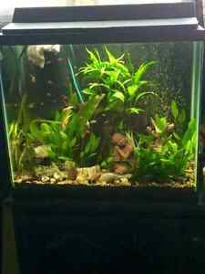 25 gallon tank for sale