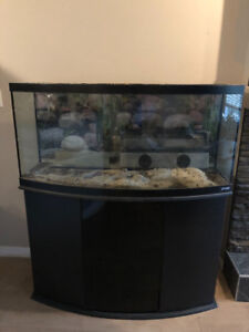 72 gallon bow front and cabinet