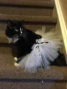 Handmade tutu's for kids, cats, dogs, collar accessories