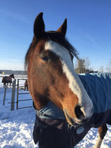 Help to Rehome your Horse or Fix Issues- Rocky Mountain House