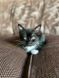 Wee boy ready for a loving new home