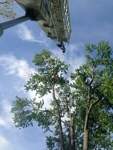 Tree removals, storm clean up , pruning, and felling of trees Cambridge Kitchener Area image 4