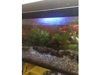 2 Ft Aquarium & Fish