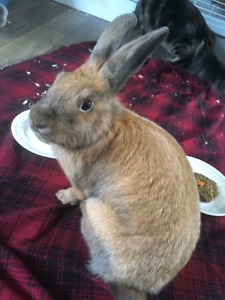 Rabbits free to a good home!