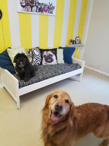 A Retreat for your dog Treetops Petresort