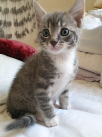 6 Beautiful Kittens Ready For Their Forever Home