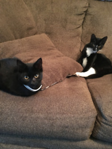 Adorable kittens for rehoming