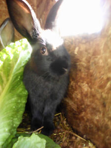 3 rabbits to rehome