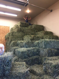 Top Quality Hay