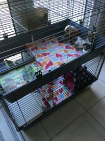 Ferplast indoor 2 tier cage