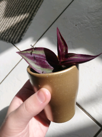 Small house plant in little gold pot