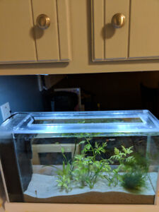 Fluval spec v 5 gallon fish tank