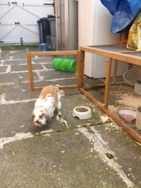 2 Rabbits, indoor and outdoor cages, feeding bottles and feeding tray