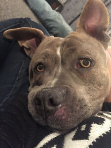 Emeryis Looking for a Foster or Forever Home