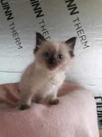 please read ** female cat ** | in Dunfermline, Fife | Gumtree