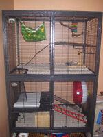 RECHERCHE GRANDE CAGE POUR 2 RATS !