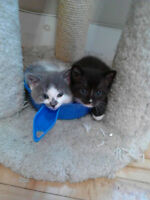 black male kitten looking for a forever home