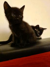 Kittens 😸 😸