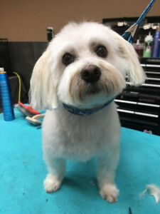POSITIVE FORCE FREE ADVANCED PROFESSIONAL GROOMER