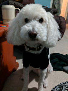 Experienced House Sitter / Pet Sitter