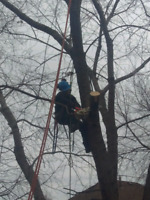 Fully Licensed Tree Maintenance