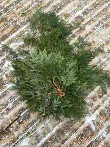 Holiday Evergreen Boughs at an Amazing Price!