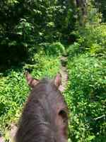 Western horseback riding @ Kuzenko Stables